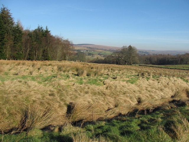 Prehistoric settlement near Smalesmouth Farm