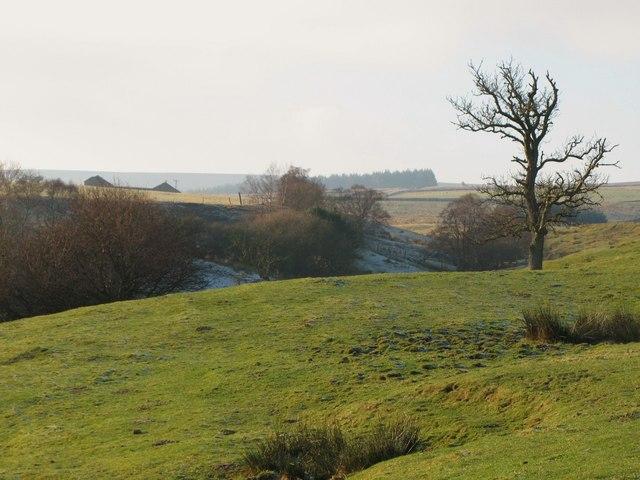 Pastures near Low Acton