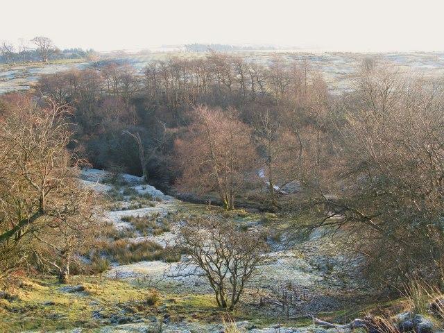 Frosty pastures and woodland around Acton Burn