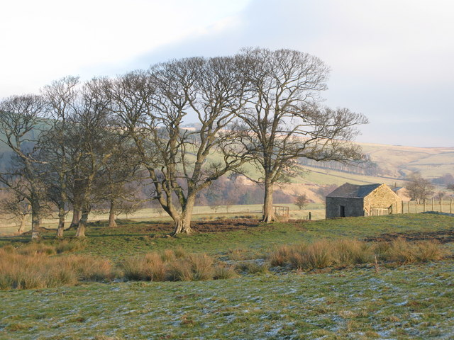Pastures above Acton Burn (2 )