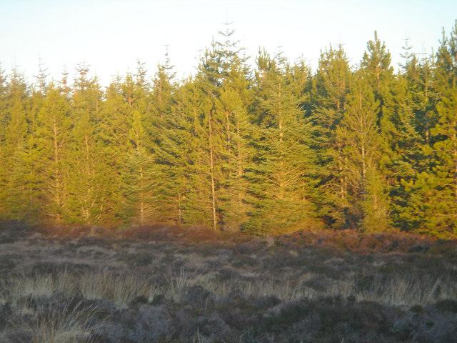 Broubster Forest