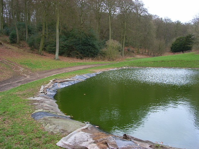 Pond in Great Cookshall Wood