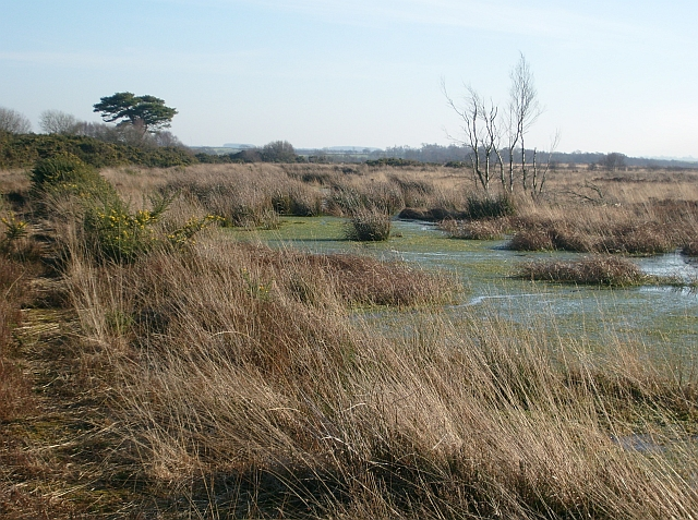 Drumburgh Moss National Nature Reserve