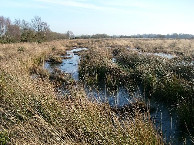 Eastern edge of Drumburgh Moss