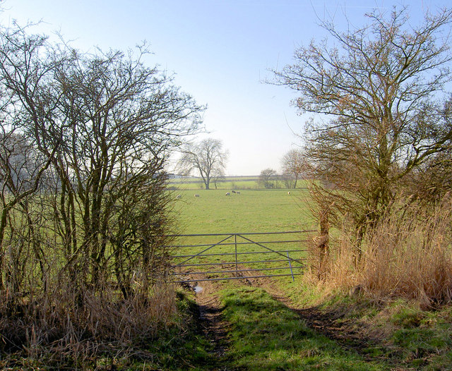 Gate and sheep grazing