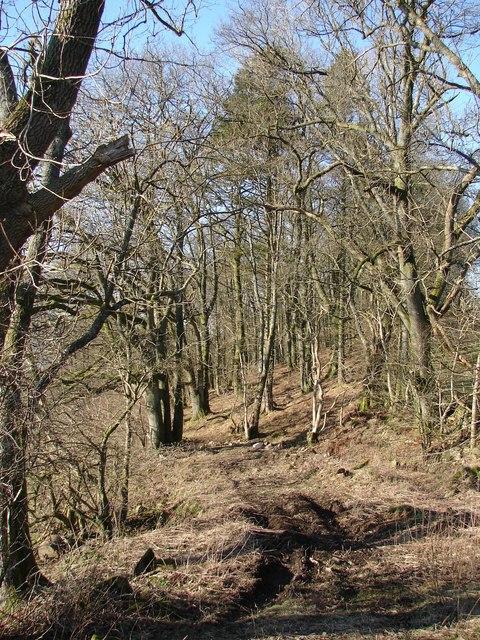 Drumrash Wood