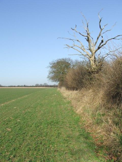 Blue sky green field dead tree
