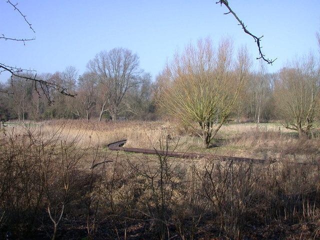 Perse Girls School nature reserve