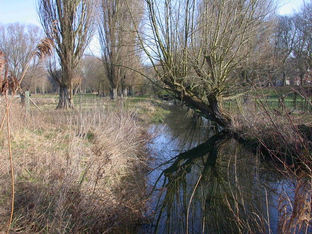 Drain with reflected tree