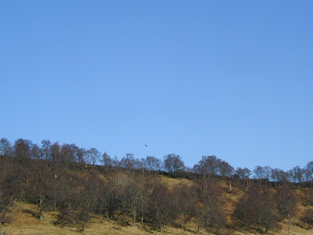 Woodland with birds of prey on the skyline