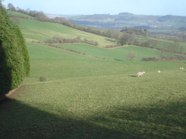 Sheep pasture above Wolfpits Farm