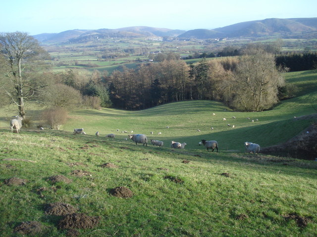 Sheep pasture on Castle Hill
