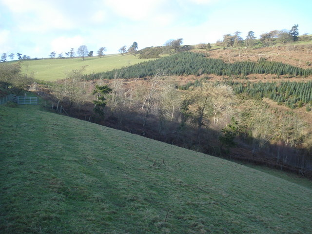 Bridleway at Pwll-y-rhedyn Wood