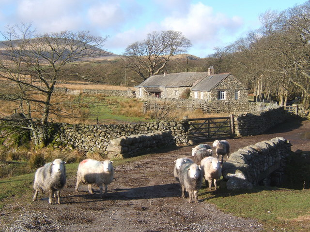 Beckstones and some local sheep