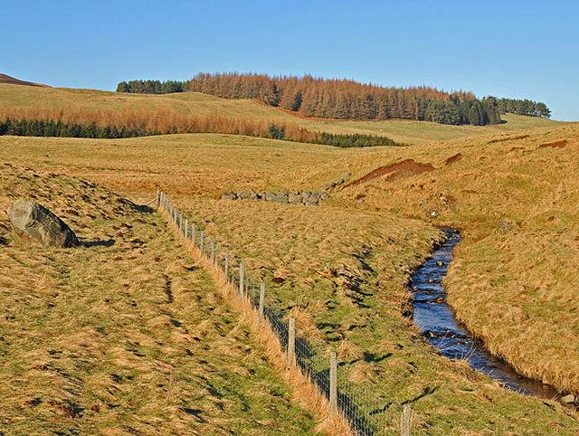 Woods and pastureland near Fendoch