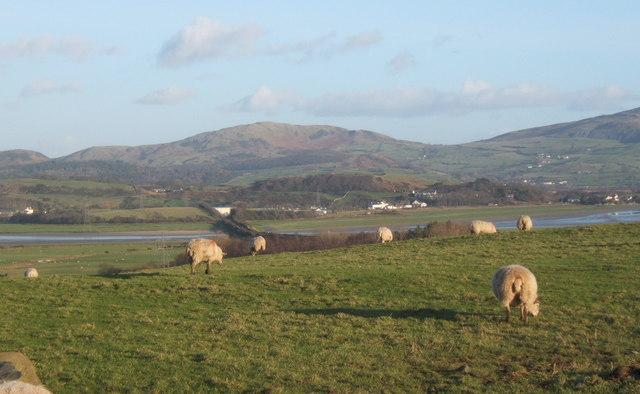 Fields overlooking Duddon estuary, between Hallthwaites and Ladyhall