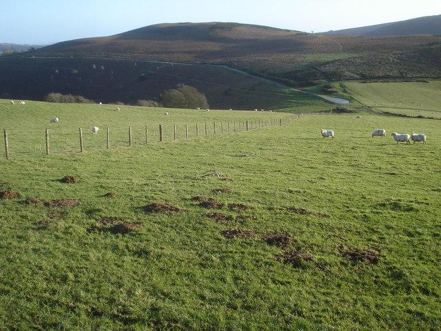 Sheep pasture near Molecatchers Wood