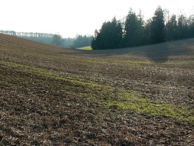 Farmland and copse near Coln St Aldwyns