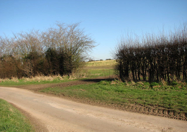 Gap in the hedgerow