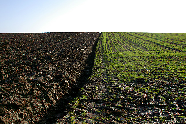 Ploughed and Sown