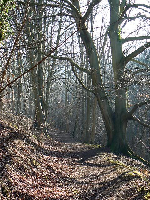Footpath and trees, Breakheart Plantation, near Postlip