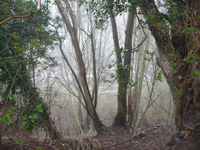 Old quarry viewed through the trees by Vicarage Lane