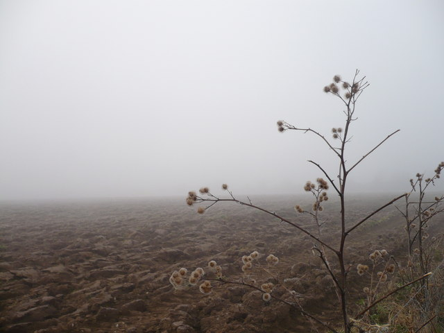 A ploughed field in the fog by footpath to Brogdale Road