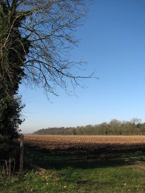 Bare field in February