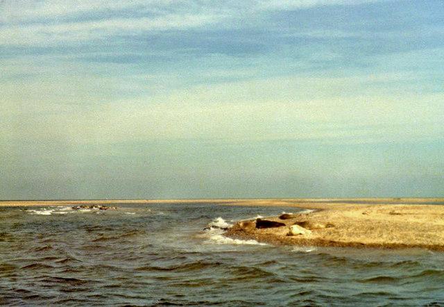 Grey Seals at Blakeney Point, Norfolk