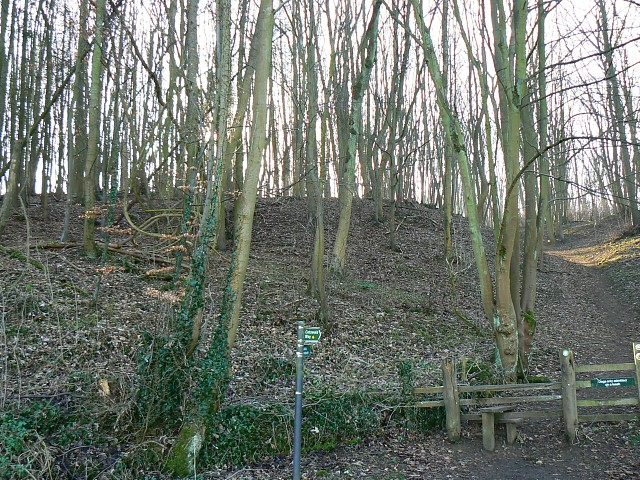 Cotswold Way, Breakheart Plantation, near Winchcombe