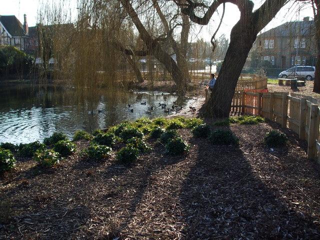 The Pond Ruislip