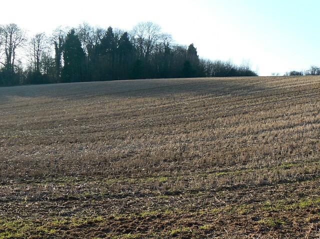 Farmland and copse, near Coln St Aldwyns