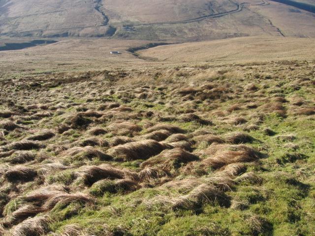 Snarhead Hill hillside towards Duntercleuch