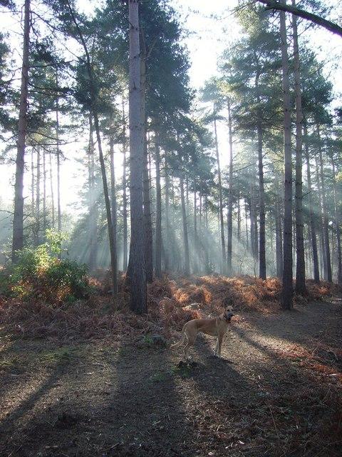 Woodland on ranges near Mytchett