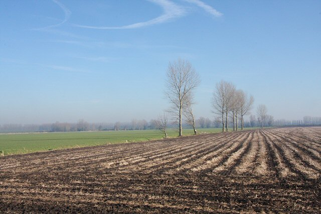 Farmland near Isleham