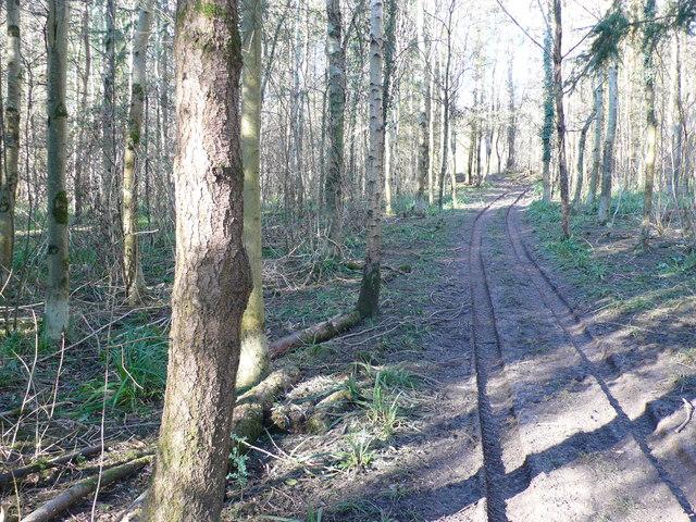 Woodland track near Purse Caundle