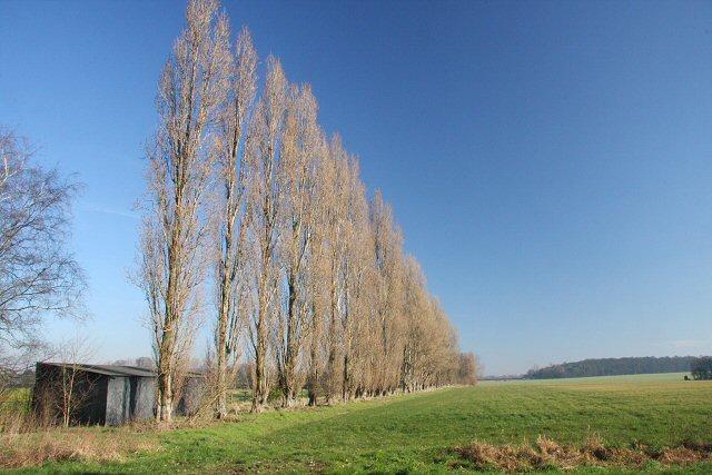 Trees near Chippenham Lodge