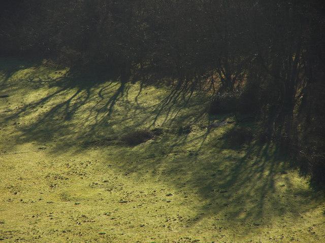 Tree Shadows in Millpond Bottom
