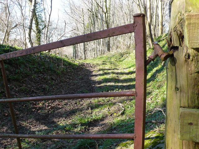 GOML woodland on Toomer Hill