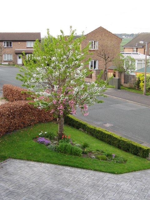 Langley Lane in bloom