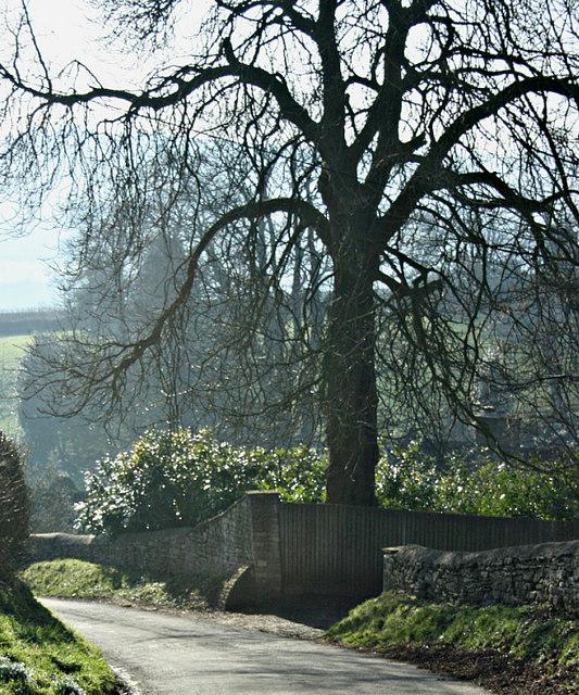 2008 : Steep hill near Alcombe