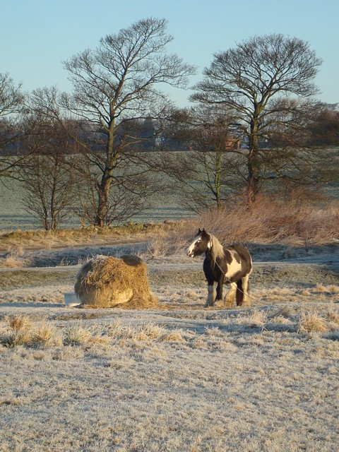 Frosty morning, Heath Common