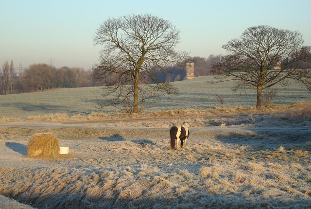 Frosty morning, Heath Common