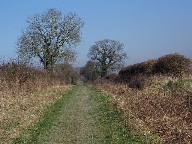 Bridleway near Gussage All Saints