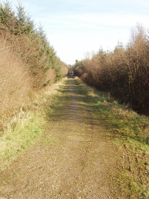 Forest track, Summerwell Moor Plantation