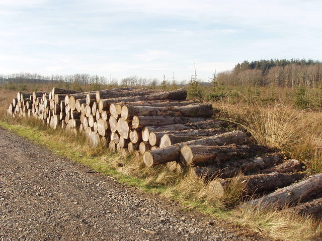 Stack of timber, Summerwell Moor Plantation