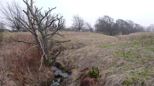 Decaying woodland