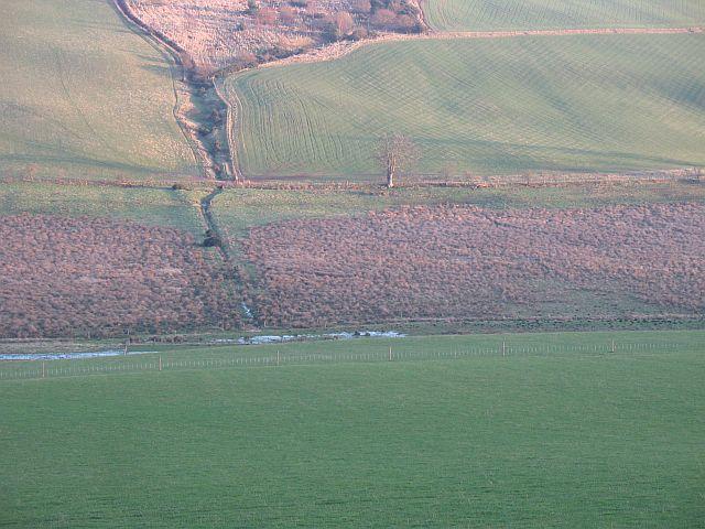 Fendyhall Moss