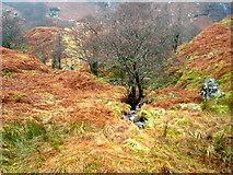 NN3714 : A Burn in Glen Gyle by Iain Thompson