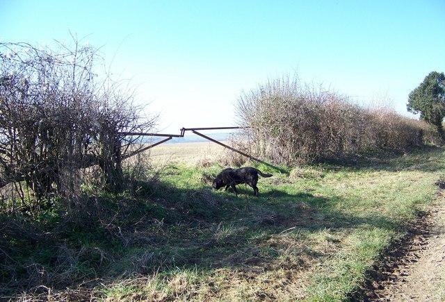 Gate, Brockington Down